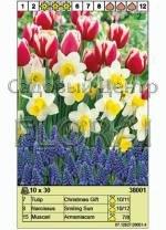 Набор луковиц - тюльпаны, нарциссы, мускари (30 шт в пакете) 38001. Распродажа -50%