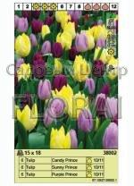 Набор тюльпанов (18 шт в пакете) 38002