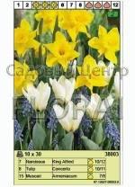 Набор луковиц - нарциссы, тюльпаны, мускари (30 шт в пакете) 38003. Распродажа -50%