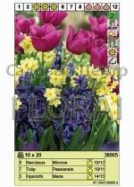 Набор луковиц - тюльпаны, нарциссы, гиацинты (20 шт в пакете) 38005. Распродажа -50%