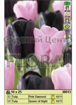 Набор тюльпанов (25 шт в пакете) 38013