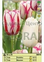 Набор тюльпанов (25 шт в пакете) 38014.