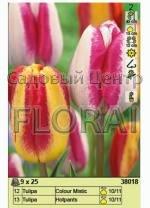 Набор луковиц тюльпанов (25 шт в пакете) 38018. Распродажа -50%