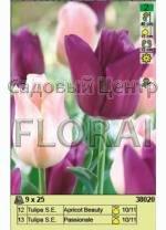 Набор луковиц тюльпанов (25 шт в пакете) 38020. Распродажа -50%