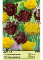 Набор тюльпанов (25 шт в пакете) 38023. Распродажа -50%