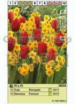 Набор луковиц - тюльпаны и нарциссы (25 шт в пакете) 38024. Распродажа -50%