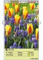 Набор луковиц - тюльпаны и крокусы (25 шт в пакете) 38032. Распродажа -50%