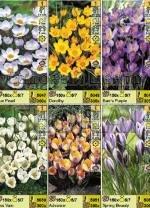 """Крокусы серии """"Botanical-2"""" (71076) 6 сортов. Распродажа -50%. Цена за 1 шт."""