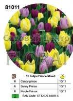Набор тюльпанов в посадочной корзине 18 шт 81011