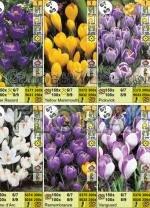"""Крокусы, серия """"Large Flowering"""" (71074) 6 сортов. Распродажа -50%. р-р 8/9. Цена за 1 шт."""