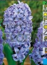 Гиацинт Delft Blue  (3 шт в красивой коробочке)  90309