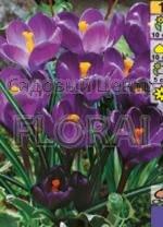 Крокус Flower Record (5371)