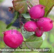 Снежноягодник Magic Berry С3