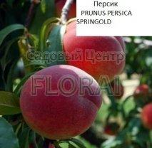 Персик SPRINGOLD (крупномер из Италии, под заказ)