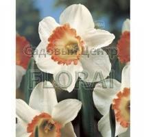 Нарцисс Pink Charm (4879)