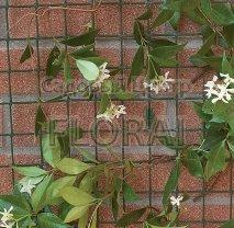 Сетка декоративная для вьющихся растений Tenax COROLLA зеленая. Уп-ка  1*5м