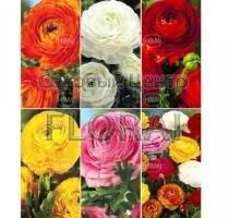Лютики из серии Spring Collection (71082). Цена за 1 шт.