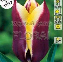 Тюльпан Gavota