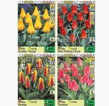 Тюльпан Botanical. Микс-2