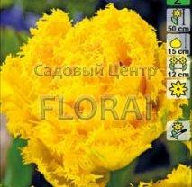 Тюльпан бахромчастый Exotic Sun (упаковка 5шт)